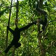 坝王岭长臂猿自然保护区