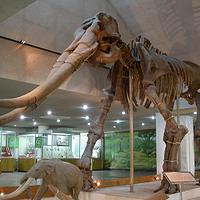 中国古动物馆