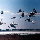 丹顶鹤自然保护区