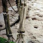 刘家峡恐龙国家地质公园