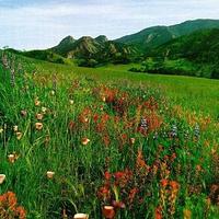 巴山神田草原