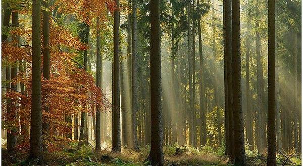 一大片森林简笔画