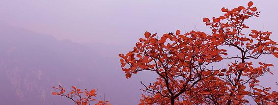 唐诗里的秋天