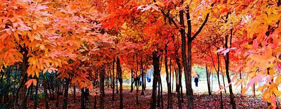 走进长春的秋天