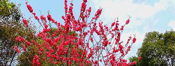 无锡春季赏花攻略
