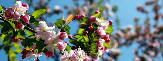 周末去赏花