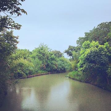 2014西溪游记湿地_v游记地址_门票_公园_攻略攻略帮3解冻鸟儿图片
