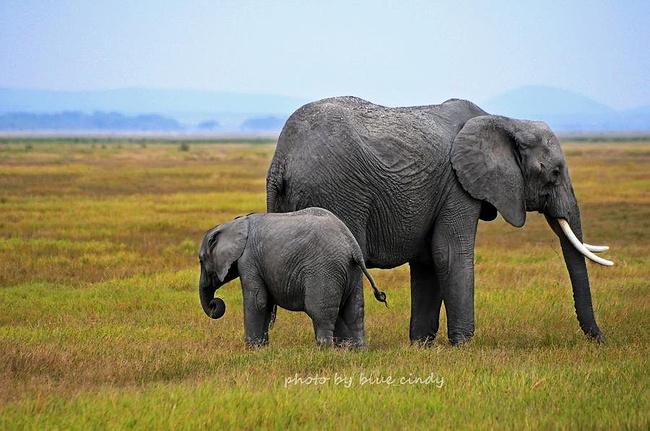 大象母子,温馨的画面