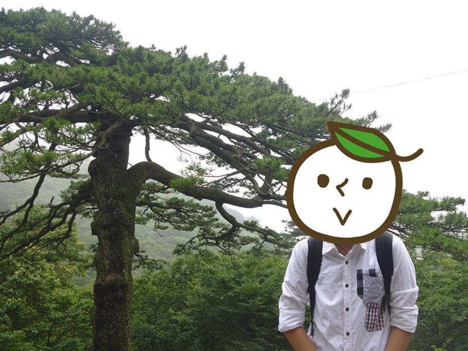 的松树那样生长