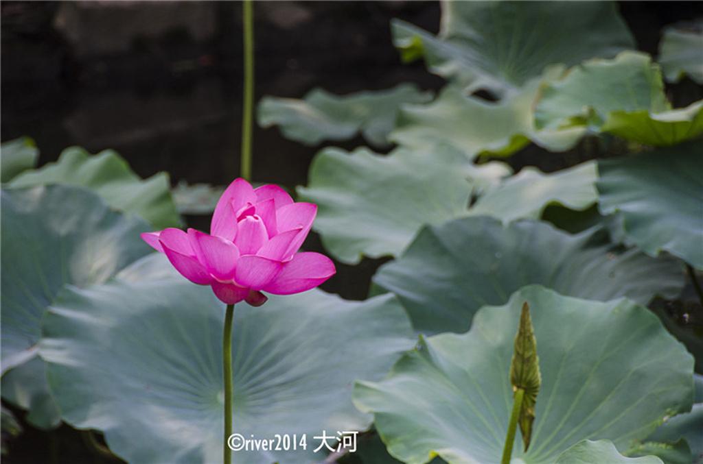 草坪是最大的_上海植物园