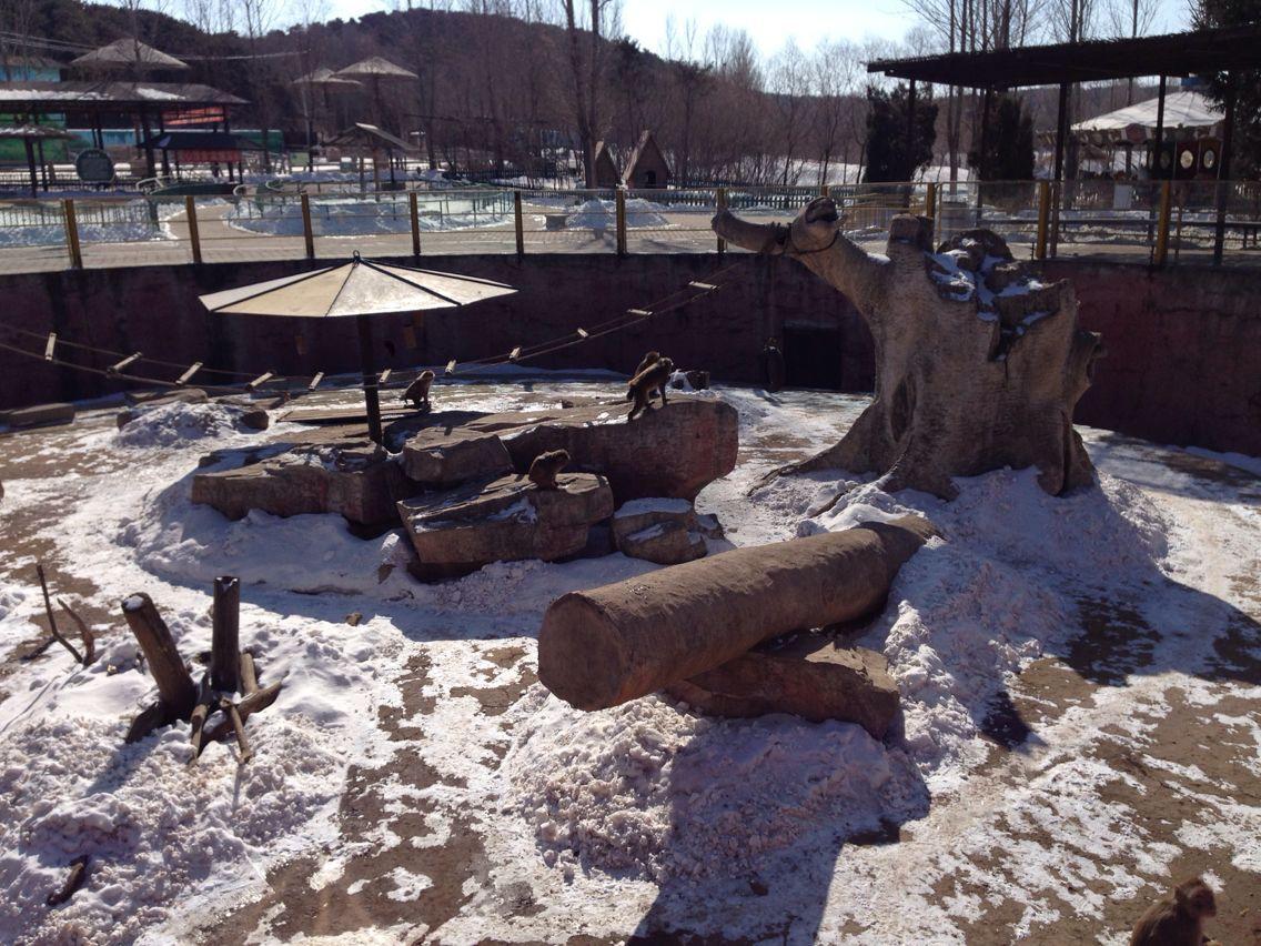 冰川动物乐园
