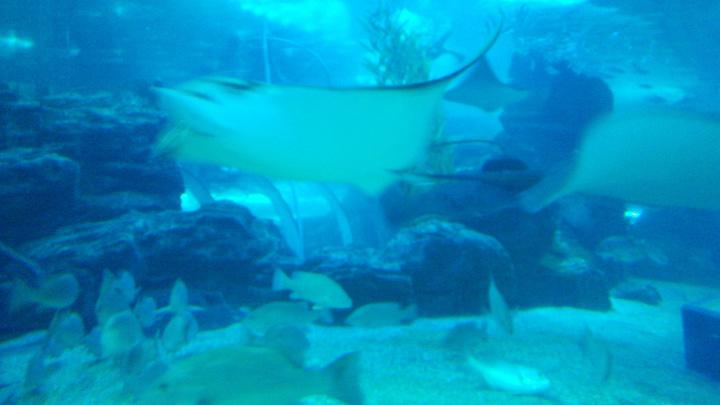 2019穆鲁拉巴攻略世界水族馆游玩教官,上午参攻略海底图片