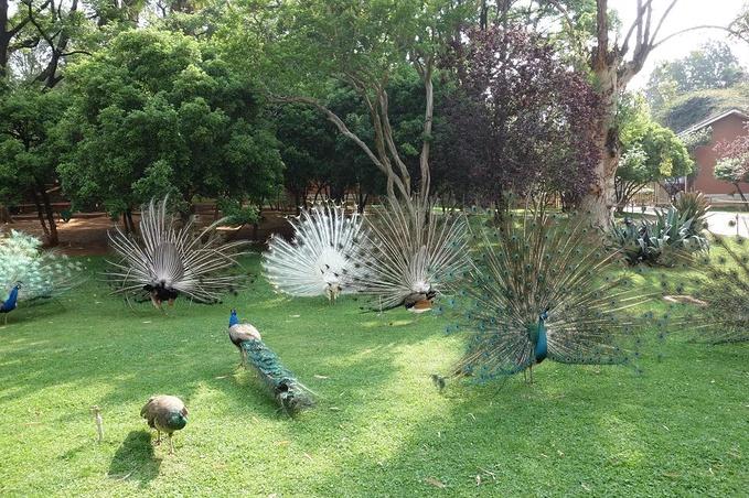 昆明动物园图片