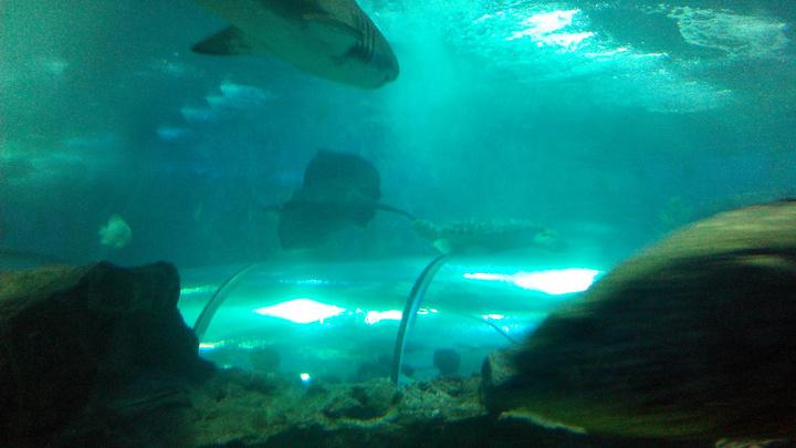 2019穆鲁拉巴动漫海底水族馆游玩世界,上午参十q版人物攻略延禧攻略图片