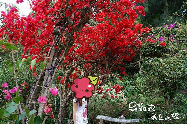 各个景点在不同的季节有不同的景致,春天可以感受百花厅的百花争妍