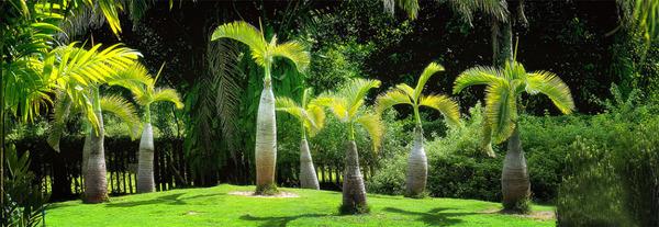 中科院西双版纳热带植物园图片
