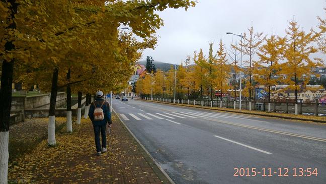 银杏树下的公路