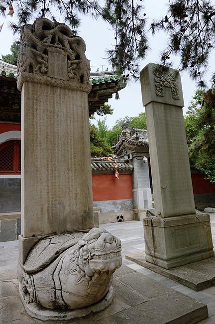 北京的古松名木,以西郊为冠.在   戒台寺   中,就有许多的松树,树