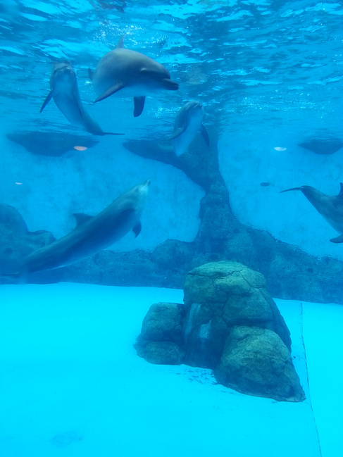 壁纸 动物 海洋动物 鲸鱼 桌面 487_649 竖版 竖屏 手机