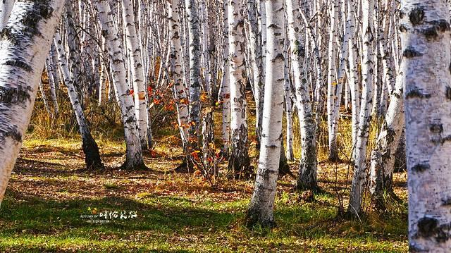 林中在旺季的时候还可以看到驯鹿,不过是要花钱的.