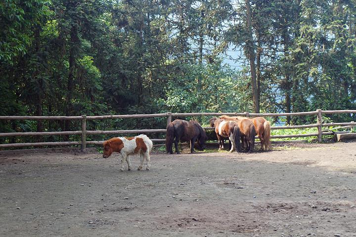 """记得不错的话,长隆野生动物园是250还是300的门票_碧峰峡野生动物园"""""""