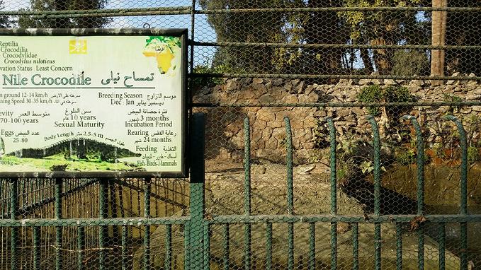 动物园里的世界 开罗动物园可能不会是多数国人在埃及的行程之一。 而下面这张萌萌的地图却勾起了我进去闯荡一番的欲望。 然而因为政治动荡,政府的资助并不稳定。食肉动物在这里过得不是很好。 哀怨的狮子,消瘦的老虎,在铁笼子里过得并不开心。 动物园的管理员们都在招呼着游客过来拍照,一般给5到10埃及镑小费就可以走到铁笼子前面去拍照了。 有人在网上的评论里写,这里是最不人道的动物园,工作人员为了小费取悦顾客到了极致。 可是,为了养家糊口,他们还有其他别的方法么? 而同属猫科的鬣狗在这里过得还算悠然自得。这里算是鬣狗