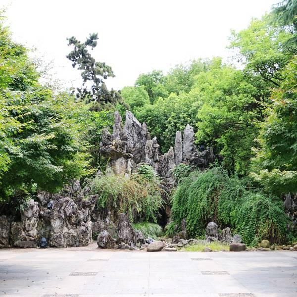 透过墙窗,外面的树木葱葱郁郁,各种植物竞相生长.