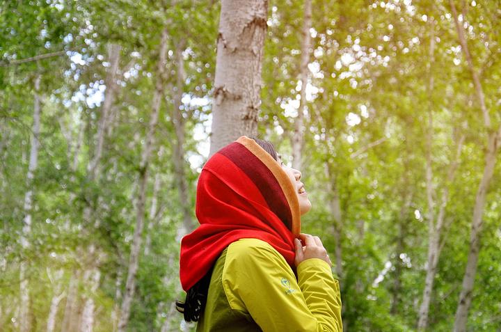"""俄罗斯歌曲~这个角度拍高高的白桦树好美~没错,我在当伪文青_白桦林"""""""