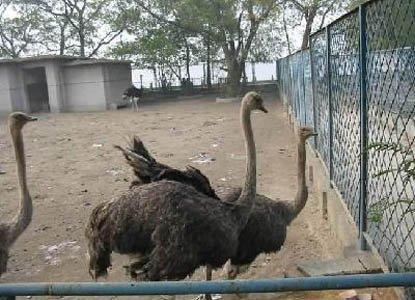 归元寺—动物园图片