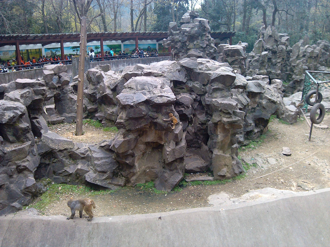 那条破路修的把北京动物园的猴山给毁了.