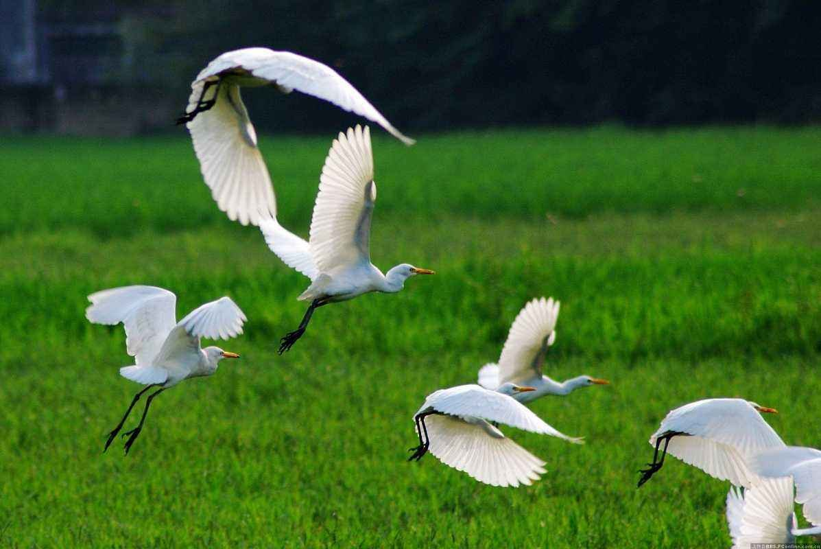 【侠姐·广东行之盐洲岛】仅花100块,就能将鹭鸟天堂一探究竟!