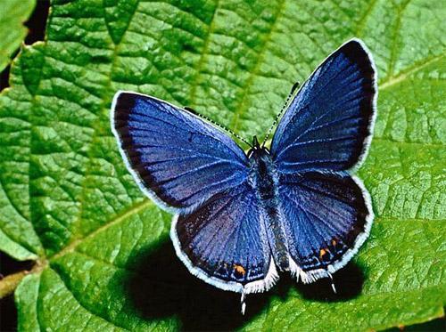 宝岛台湾的蛇头蝶的图片