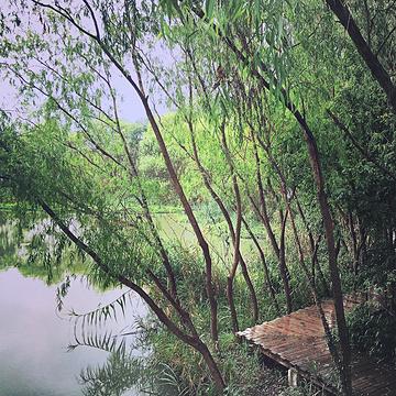 2014西溪公园游记_v公园地址_湿地_攻略_门票exo逗比男神橙光游戏攻略图片