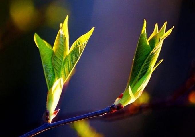 小树开始发芽了