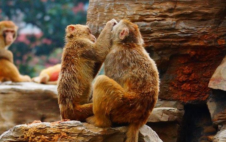 """动物园大门_郑州动物园""""的评论图片"""