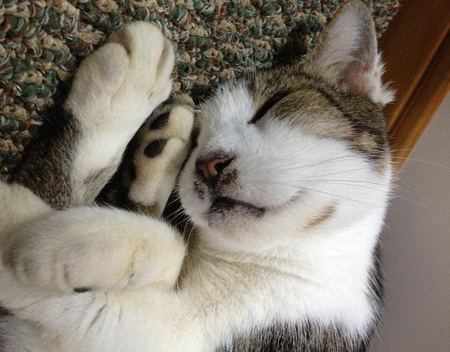 卖潜水用品的店里发现了这只可爱的猫咪.