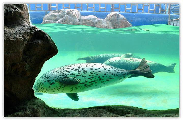 蓬莱阁毗邻,是一个集观赏性,娱乐性,趣味性,惊险刺激和反映海洋文化