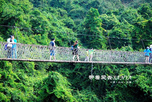 天堂森林公园·过江龙索桥图片