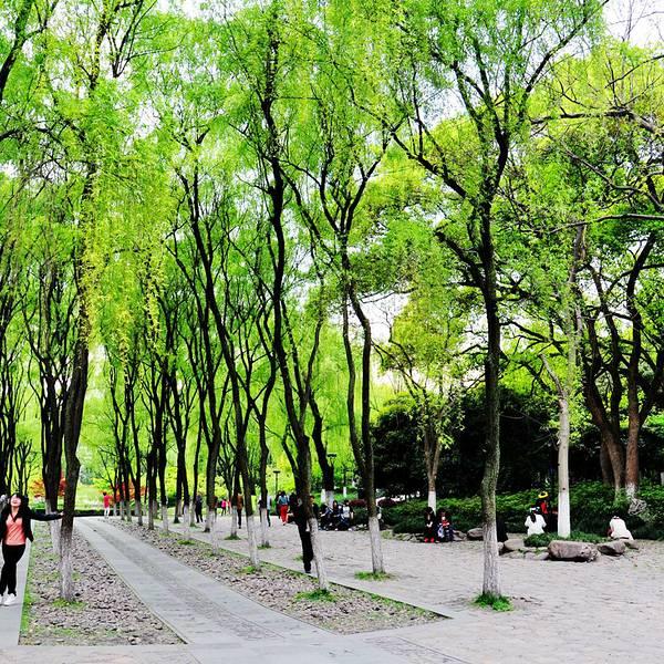 柳浪闻莺公园这个名字,就能知道这里以柳树与鸟儿为核心主题的一座
