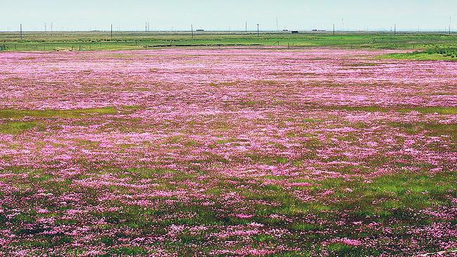 微信头像风景花卉图片下载
