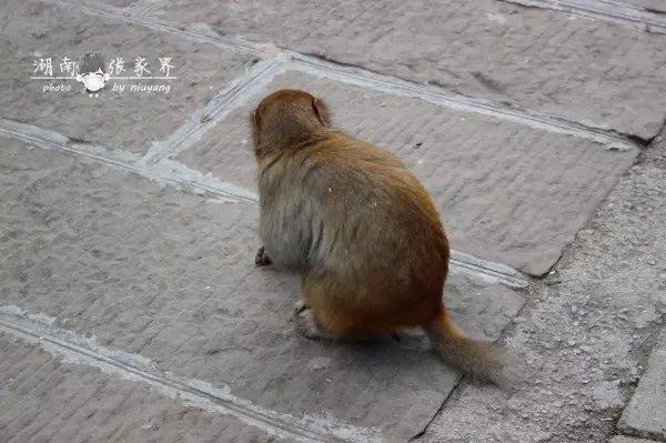 好喜欢猴子的尾巴,好可爱