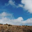 霍尔顿平原国家公园