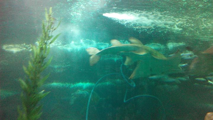 2019穆鲁拉巴海底世界水族馆游玩时代,上午参攻略小8.5攻略图片