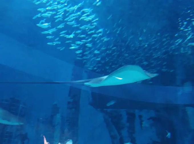 北京动物园,海洋馆图片