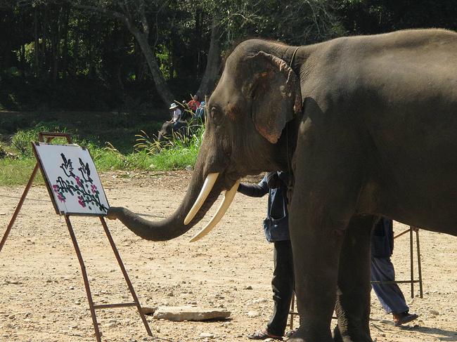 骑大象图片