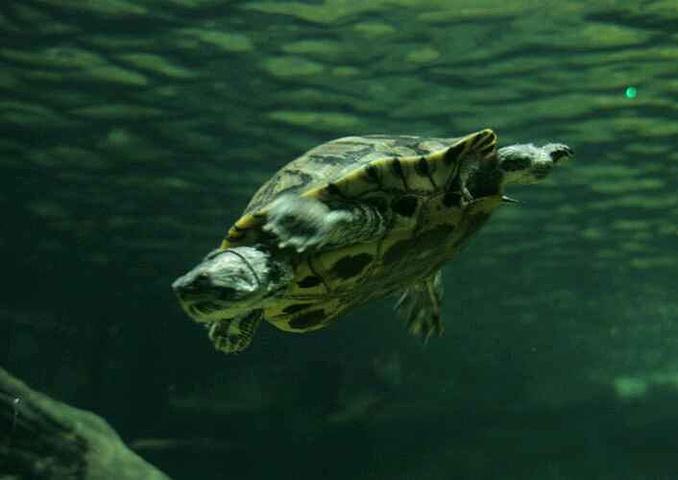 """""""海底世界""""引进的各种鱼类,海洋哺乳动物和其他生物有数百个品种,近万"""