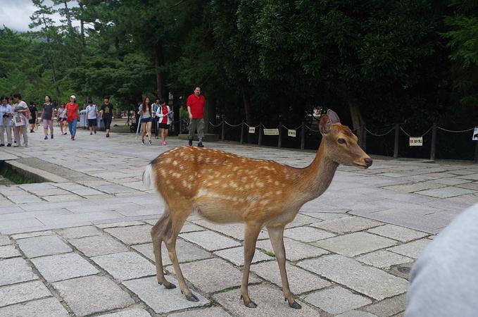 手工木头动物小鹿图片