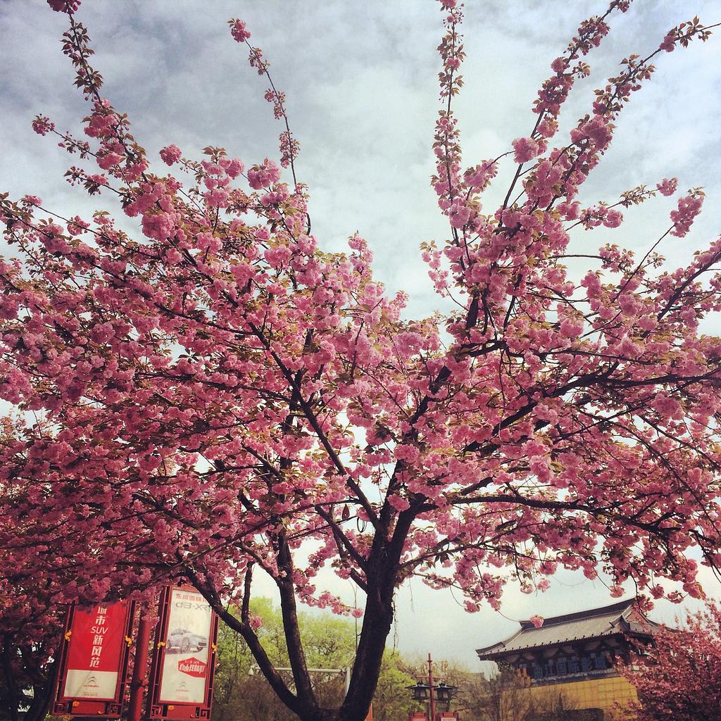 梦回攻略--感受甘肃的点点滴滴_西安旅游攻略敦煌到北京西安景点古城图片