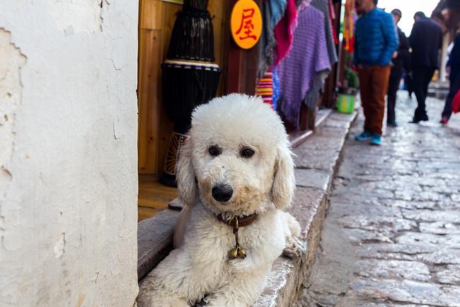 一只可爱的小狗蹲在门口.