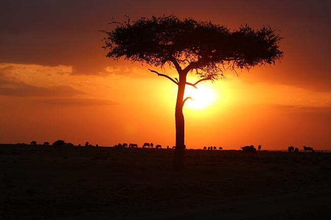 独自一人 畅游肯尼亚